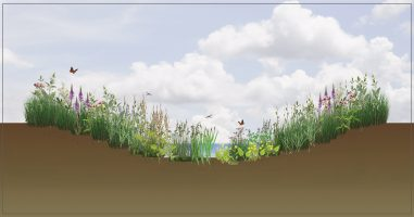 Vitacress plant section B-01 (Swale)